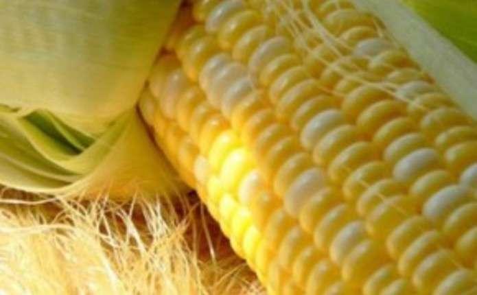 Выращивание кукурузы в ссср 30