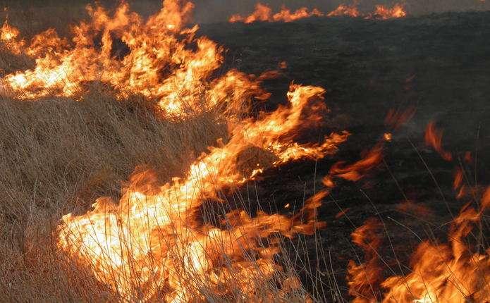 Як не вдень, то вночі: мешканці прилеглих до Франківська сіл продовжують спалювати траву і листя