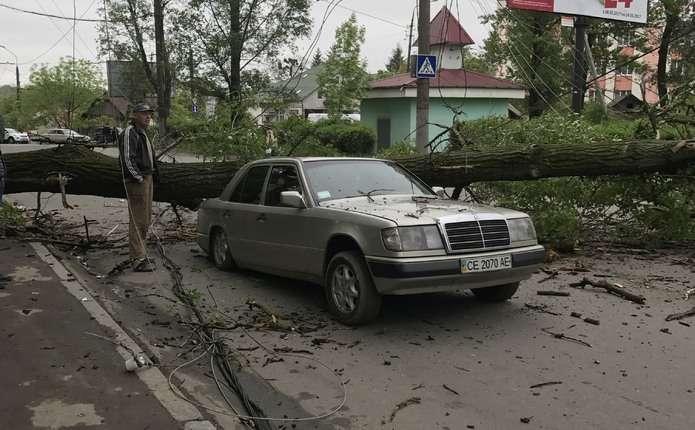 УЧернівцях дерево розтрощило автомобіль (ФОТОФАКТ)