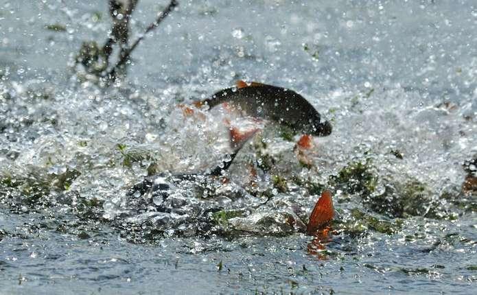 З1 квітня волинянам заборонять ловити рибу