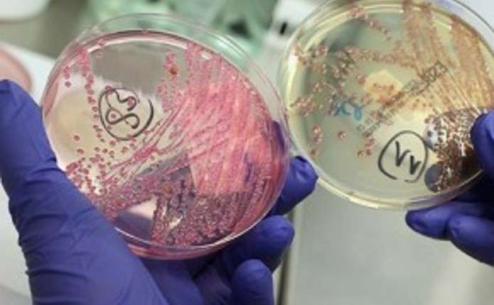 На Глибоччині зареєстрували 10 випадків кишкових інфекцій