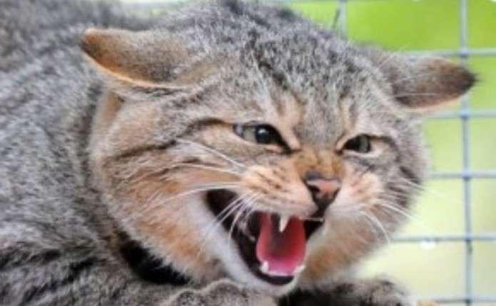 Що необхідно знати про сказ і як діяти, коли покусала тварина