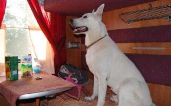 Нові правила у поїздах: пасажири можуть їздити з тваринами
