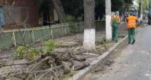 У центрі Чернівців зносять дерева 5396e43669420