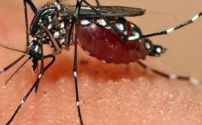 Вірус Зіка загрожує Північній та Південній Америці