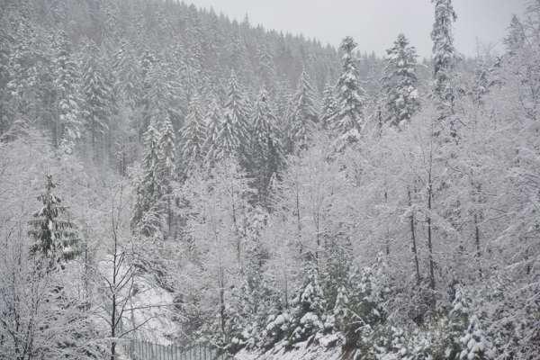 "Результат пошуку зображень за запитом ""карпати притрусило снігом"""