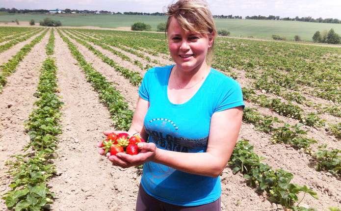 На Буковині є село, де кожен другий вирощує ягоди