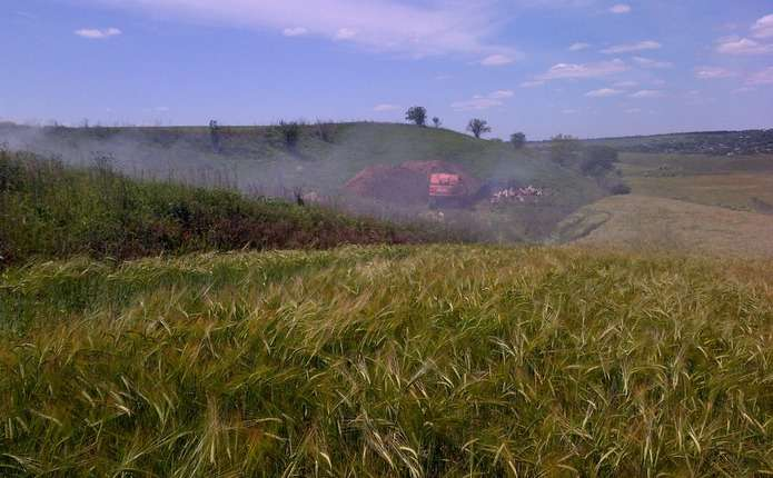 На Новоселиччині через африканську чуму спалюють свиней