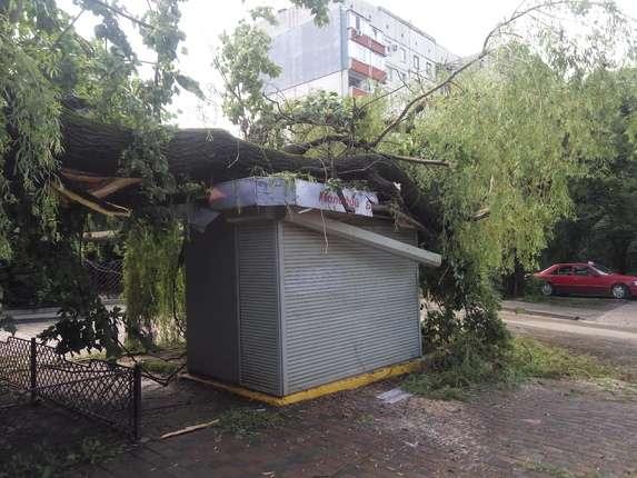 Буревій у Чернівцях повалив дерева та білборди