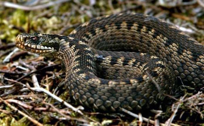 Під час відпочинку на Дністрі хлопця вкусила змія