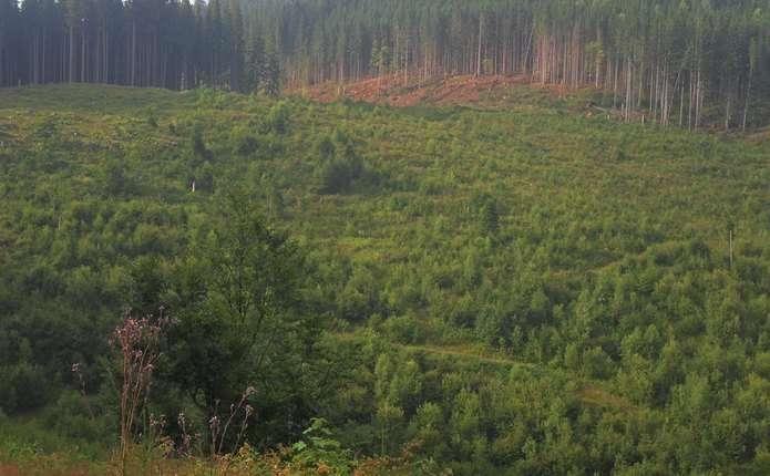 Співачку Руслану вразили площі вирубаних лісів на Путильщині