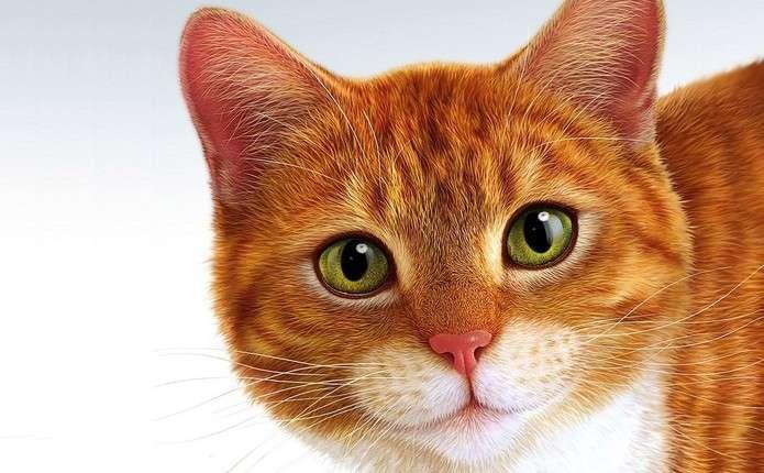 Котячий паразит змінює поведінку людини