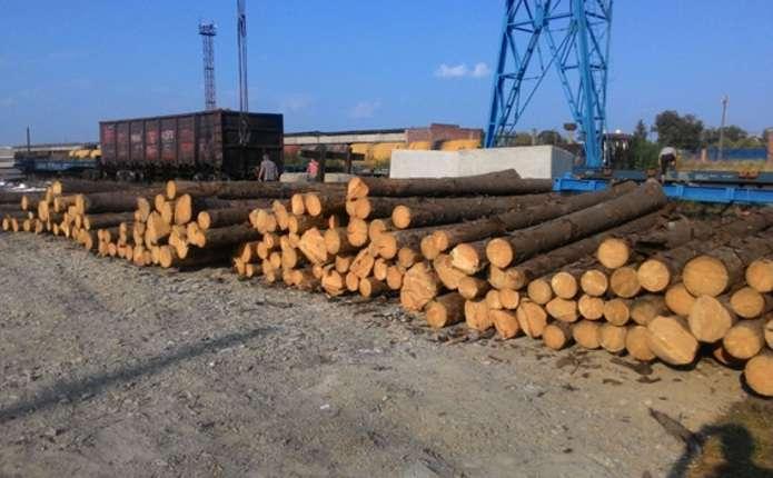Через Буковину намагалися незаконно перевезти майже 60 кубометрів деревини