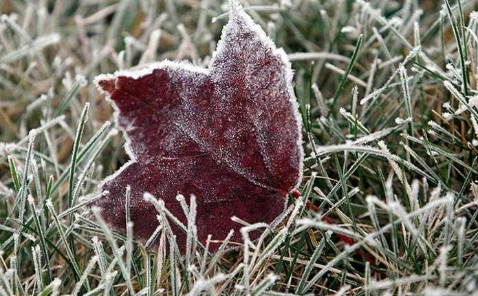 У Чернівецькій області очікуються заморозки