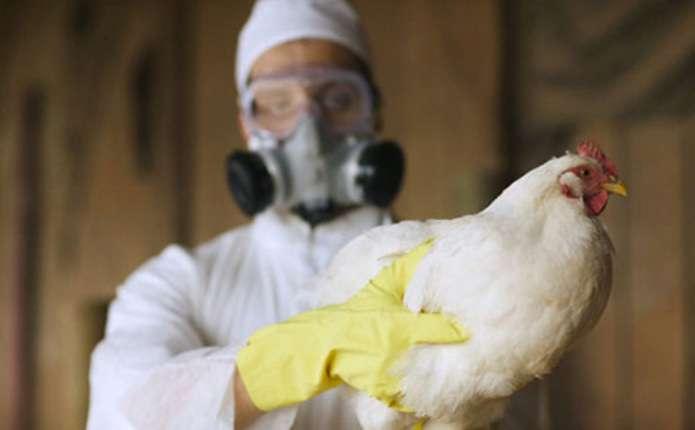 У Європі знову зафіксували пташиний грип
