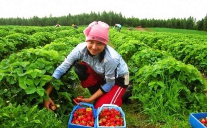 Українці оплатили пенсії 300 тисячам поляків