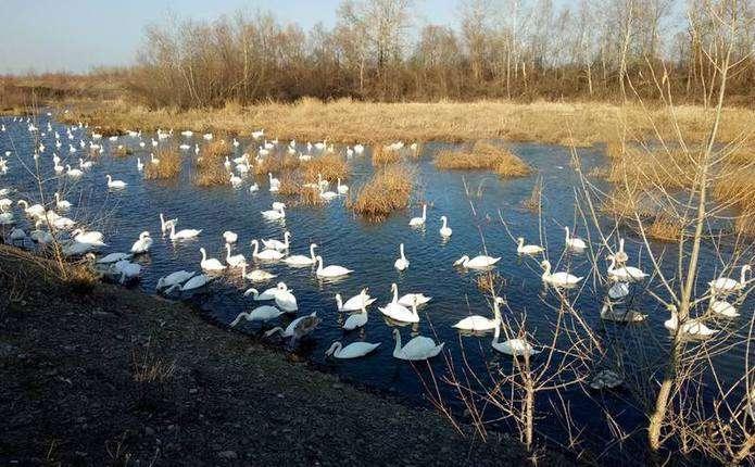 Людина може інфікуватись пташиним грипом при щільному контакті з птицею