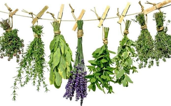 Лікарські рослини оберігають здоров'я