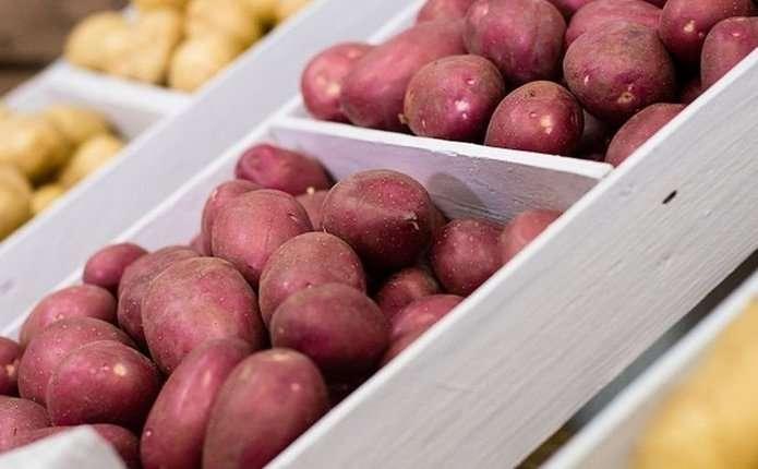 Картоплю можна саджати кілька разів на рік