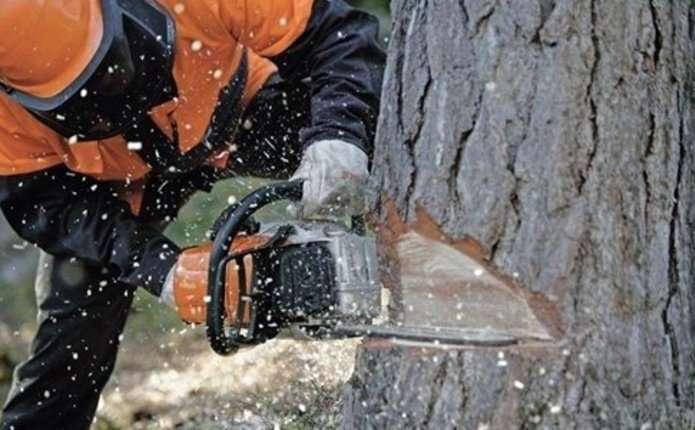 Під час звалювання дерева на Буковині смертельно травмувався лісоруб