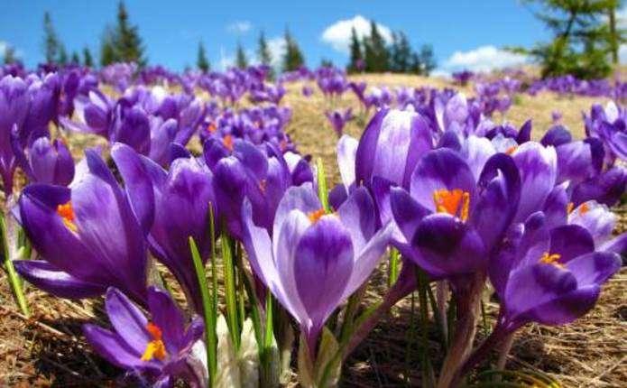 7 туристичних місць України, які варто відвідати весною