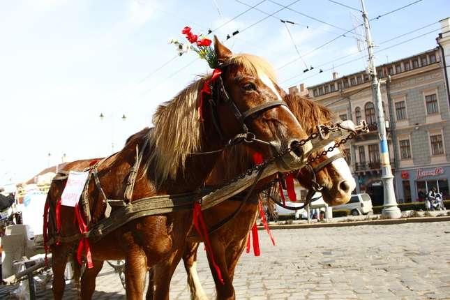Як конячка Марта вітала чернівчан до дня 8 березня