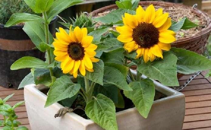 Лікарі назвали домашні рослини для лікування депресії