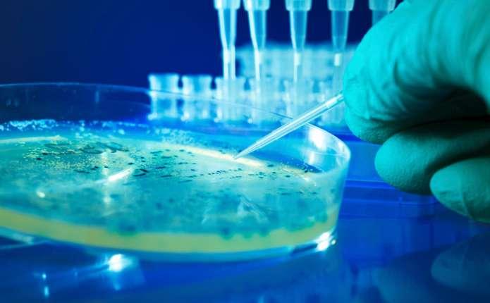Українські вчені знайшли ліки від раку