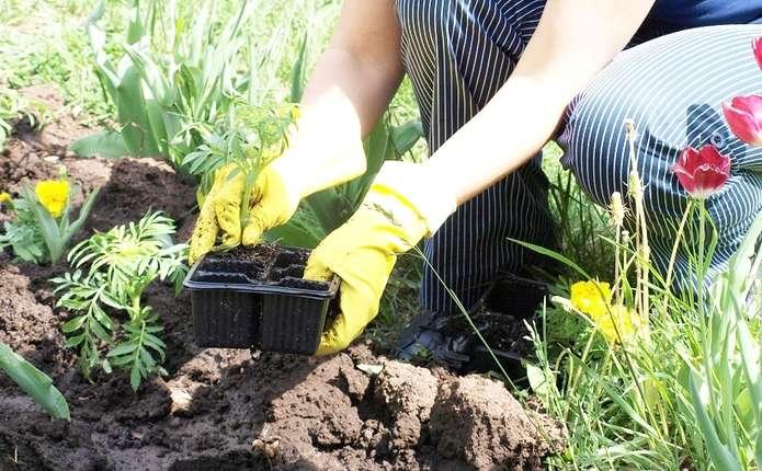 Озеленюємо подвір'я