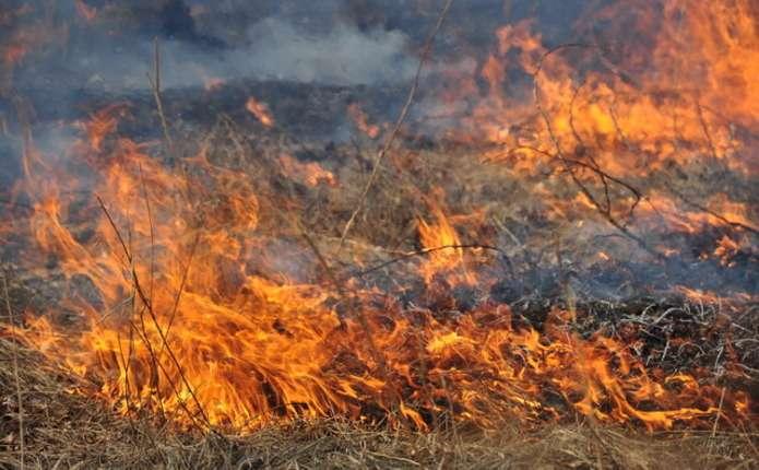 За добу у Чернівецькій області сталося 10 пожеж