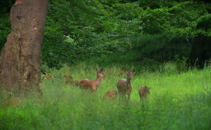 З 1 квітня у буковинських лісах розпочнеться Сезон тиші