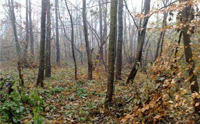 Берегометський лісгосп отримав у користування мисливські угіддя Фальківського лісництва