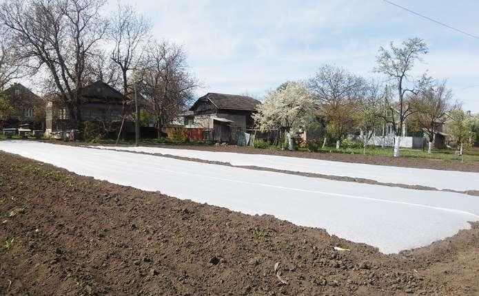 Мульчування допоможе запобігти пересиханню ґрунту та підживить рослини