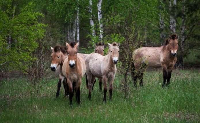 У Чорнобилі відновилася природа та мешкають дикі тварини