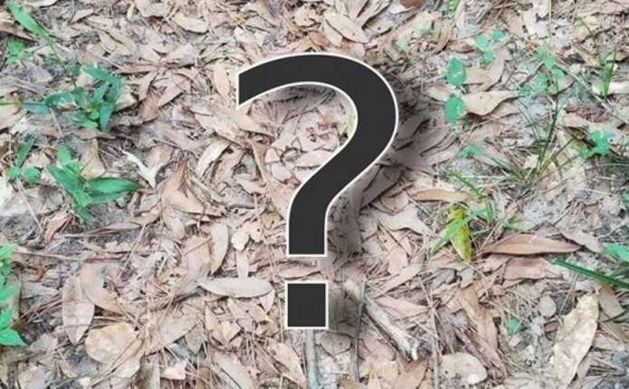 Мережу підкорила нова загадка: усі шукають змію