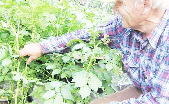 Овочі можна вирощувати у будь-яких ємностях – вони швидше ростуть і менше хворіють