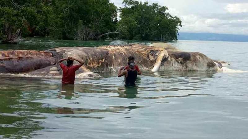 В Індонезії виявили тіло гігантської істоти