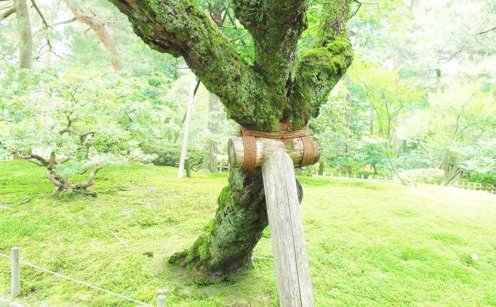 Як захистити дерева від літнього буревію