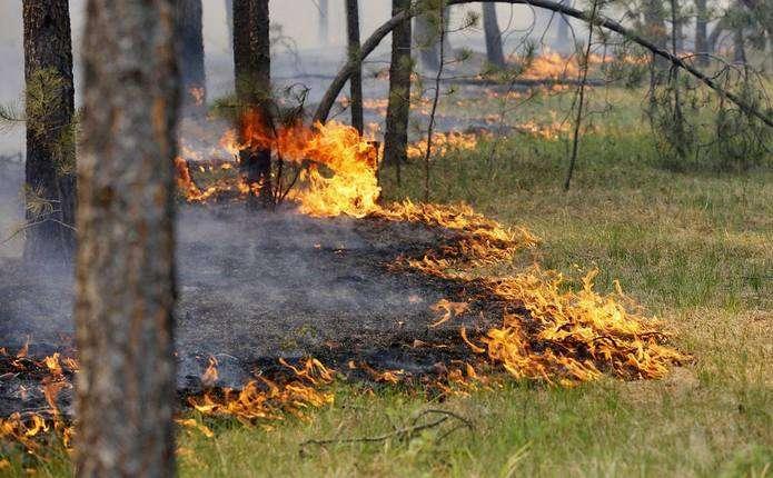 Рівень небезпеки жовтий: цими днями на Прикарпатті зберігатиметься висока пожежна небезпека