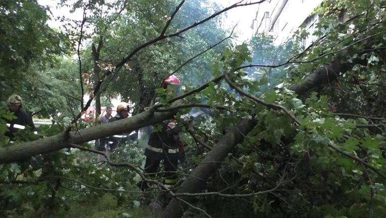 Повалені дерева та підтоплені будинки: наслідки учорашньої негоди на Прикарпатті