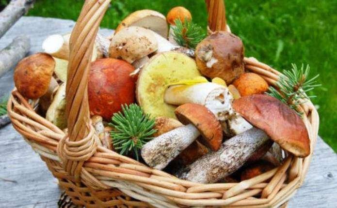 Стало відомо, скільки людей цьогоріч отруїлися грибами