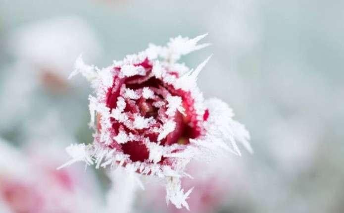 Прогноз погоди: Одразу після дощів ударять заморозки