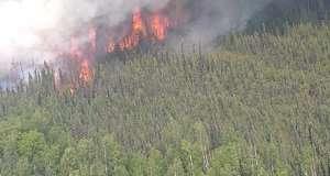 2bec45cee2cfd4 Українці лопатами і гілками гасили пожежу в Польщі