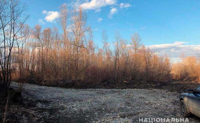 Поліція перевіряє інформацію про незаконну вирубку дерев на Вижниччині