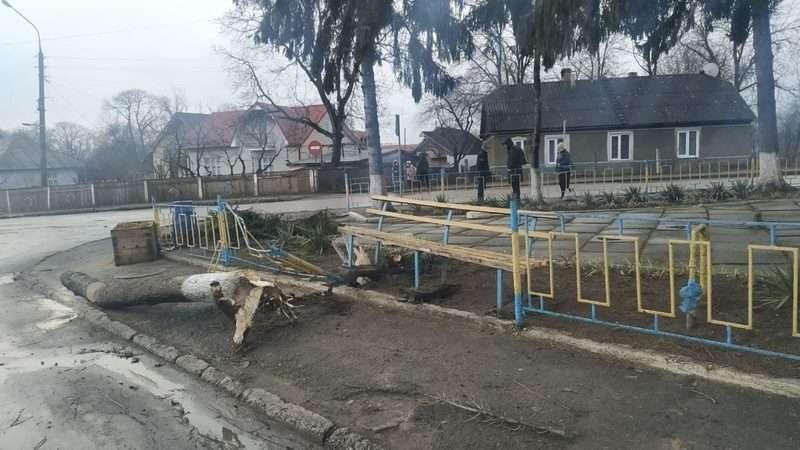 На Буковині буревій повалив дерева, огорожі та зірвав лінії електропередач