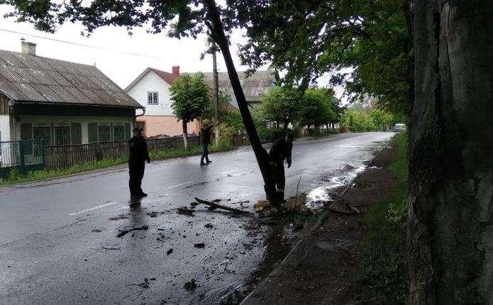 У Сторожинці на дорогу впало дерево