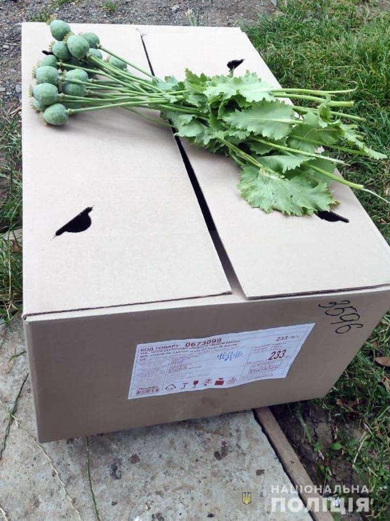 Буковинець вирощував у себе на городі снодійний мак
