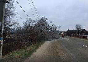 У Панці внаслідок сильного вітру на дорогу впало дерево
