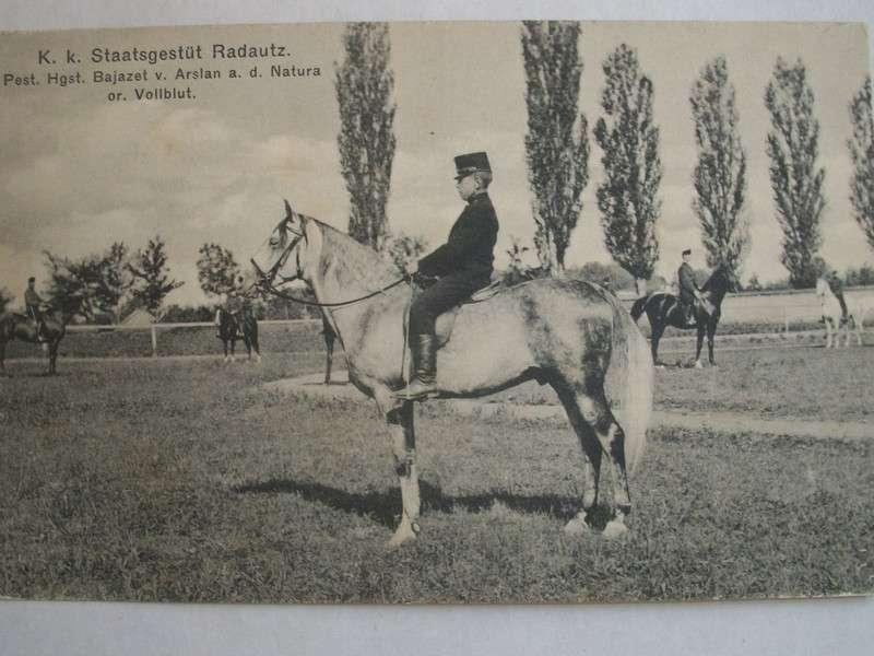 Понад сто років тому в Чернівцях почали влаштовувати перегони і збудували іподром