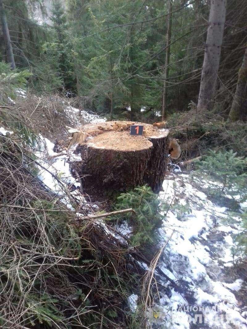 Буковинець проник до лісгоспу та незаконно зрізав дерева